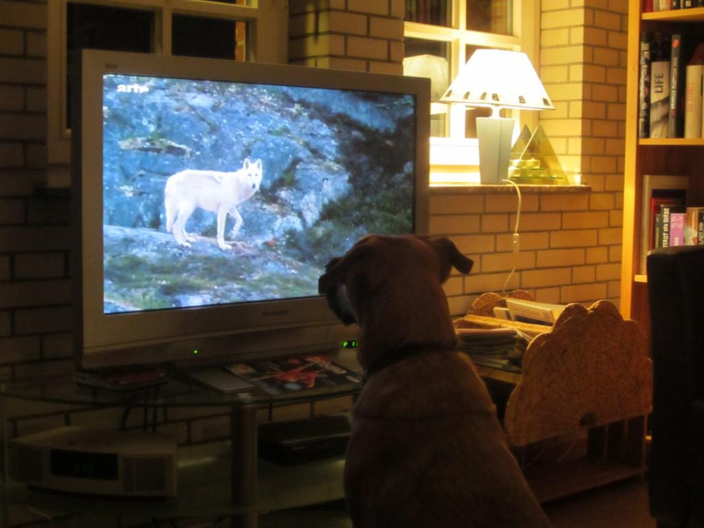 Co - Hundetrainer Bella bildet sich fort.