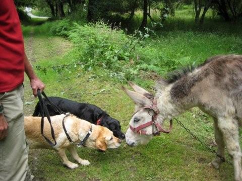 Hundeschule - andere Tiere